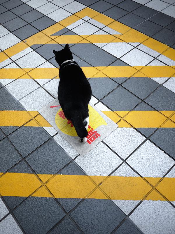 マンションの敷地を歩く黒白猫の後ろ姿1