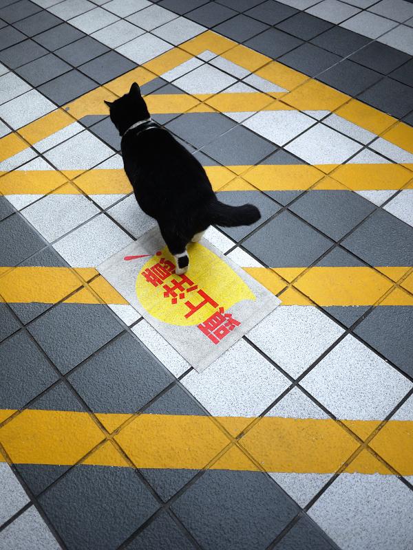 マンションの敷地を歩く黒白猫の後ろ姿2