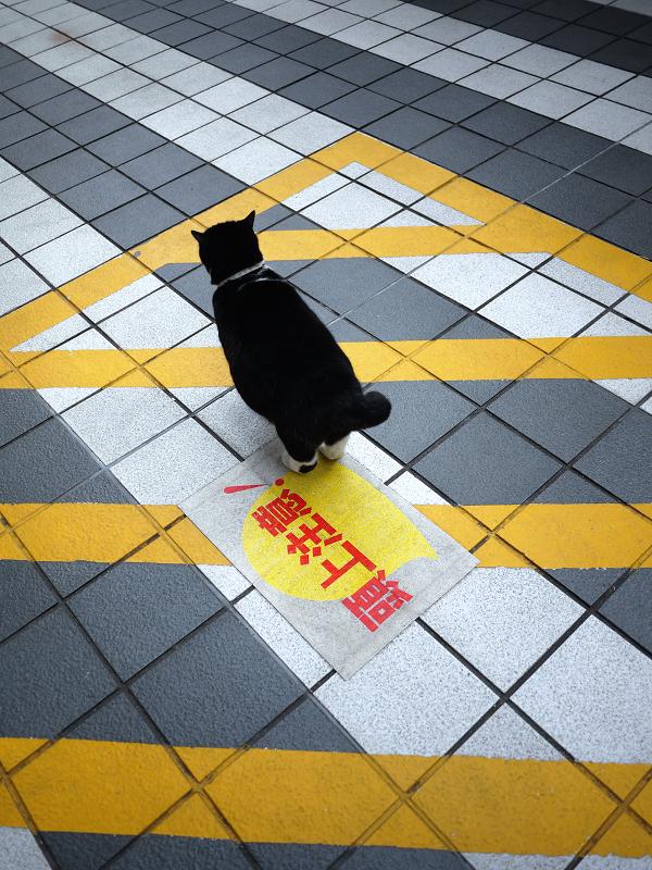 マンションの敷地を歩く黒白猫の後ろ姿3