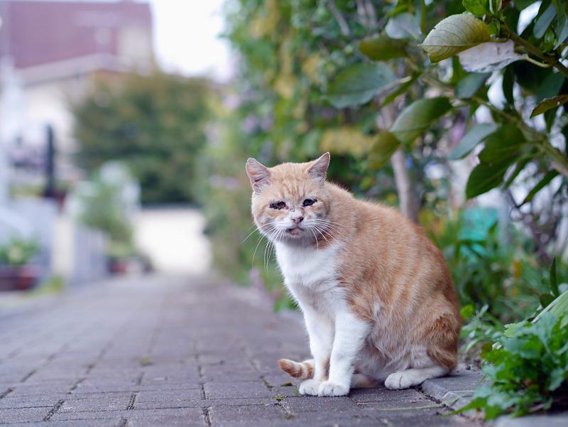 石畳と茶白猫