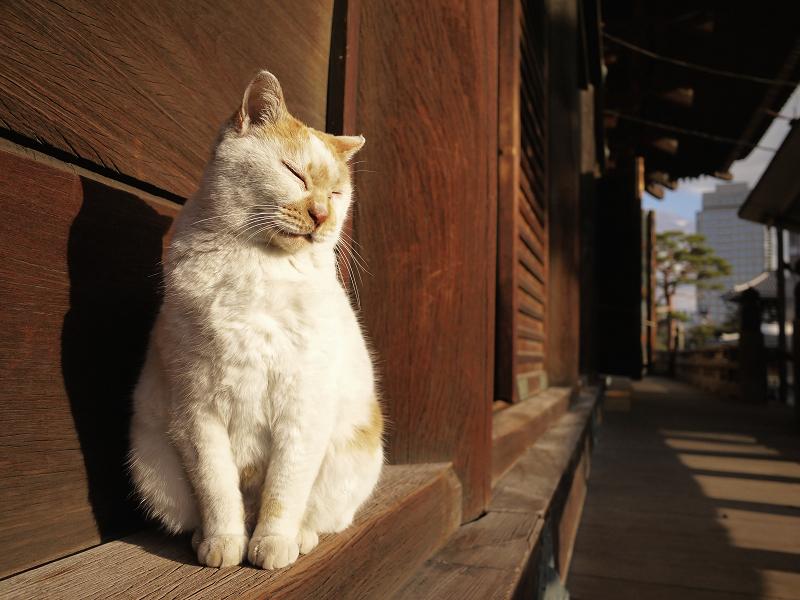 濡れ縁の端で恍惚顔の白茶猫2