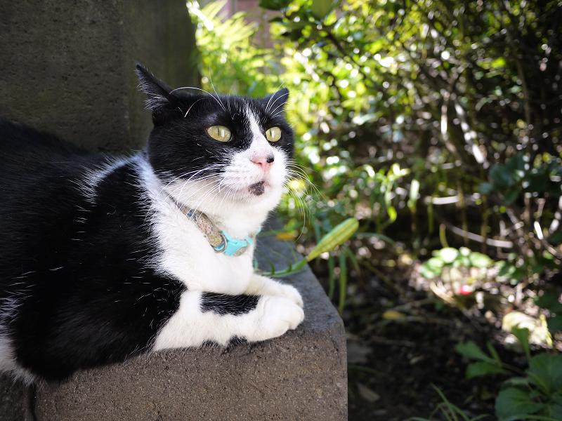 石碑の下の黒白猫