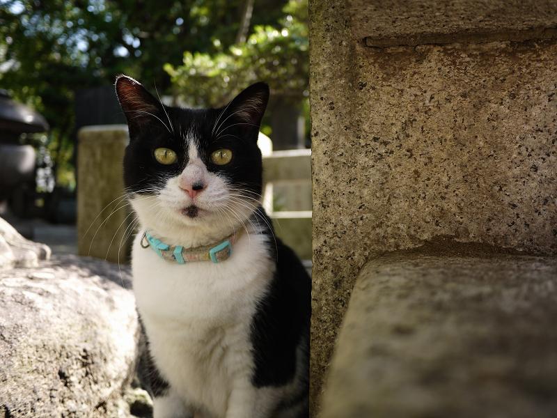 玉垣の中の黒白ネコ