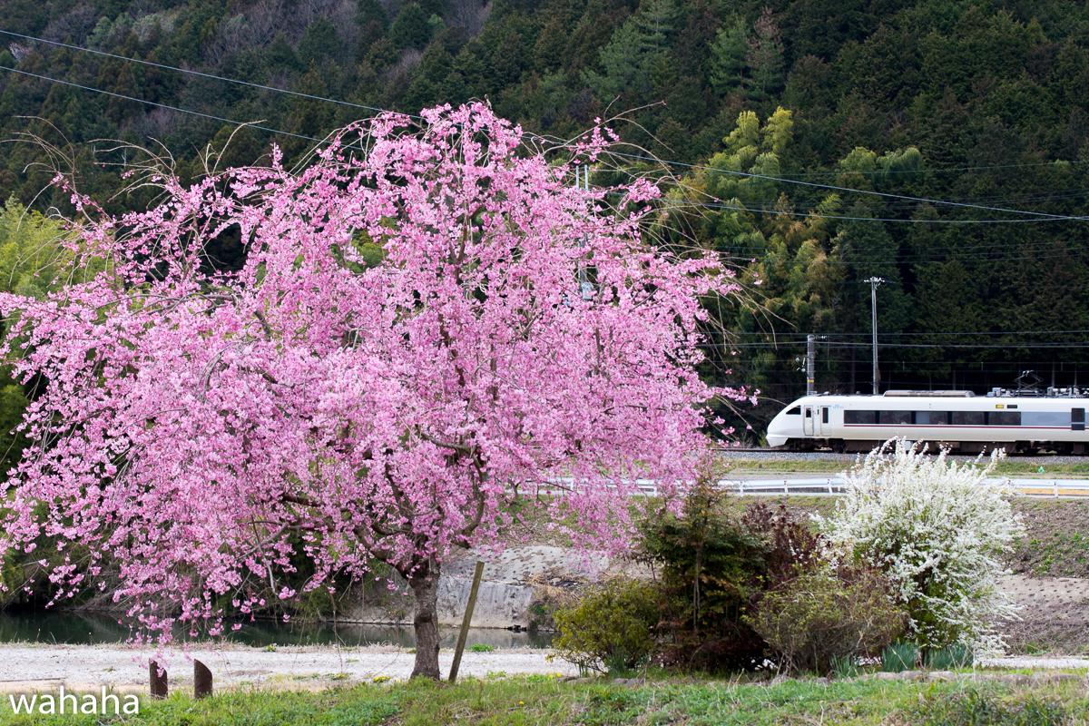 280402fukuchiyama-02.jpg