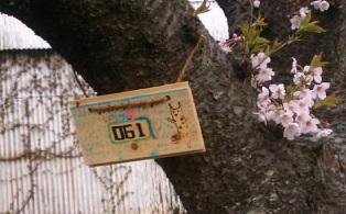 桜プレート