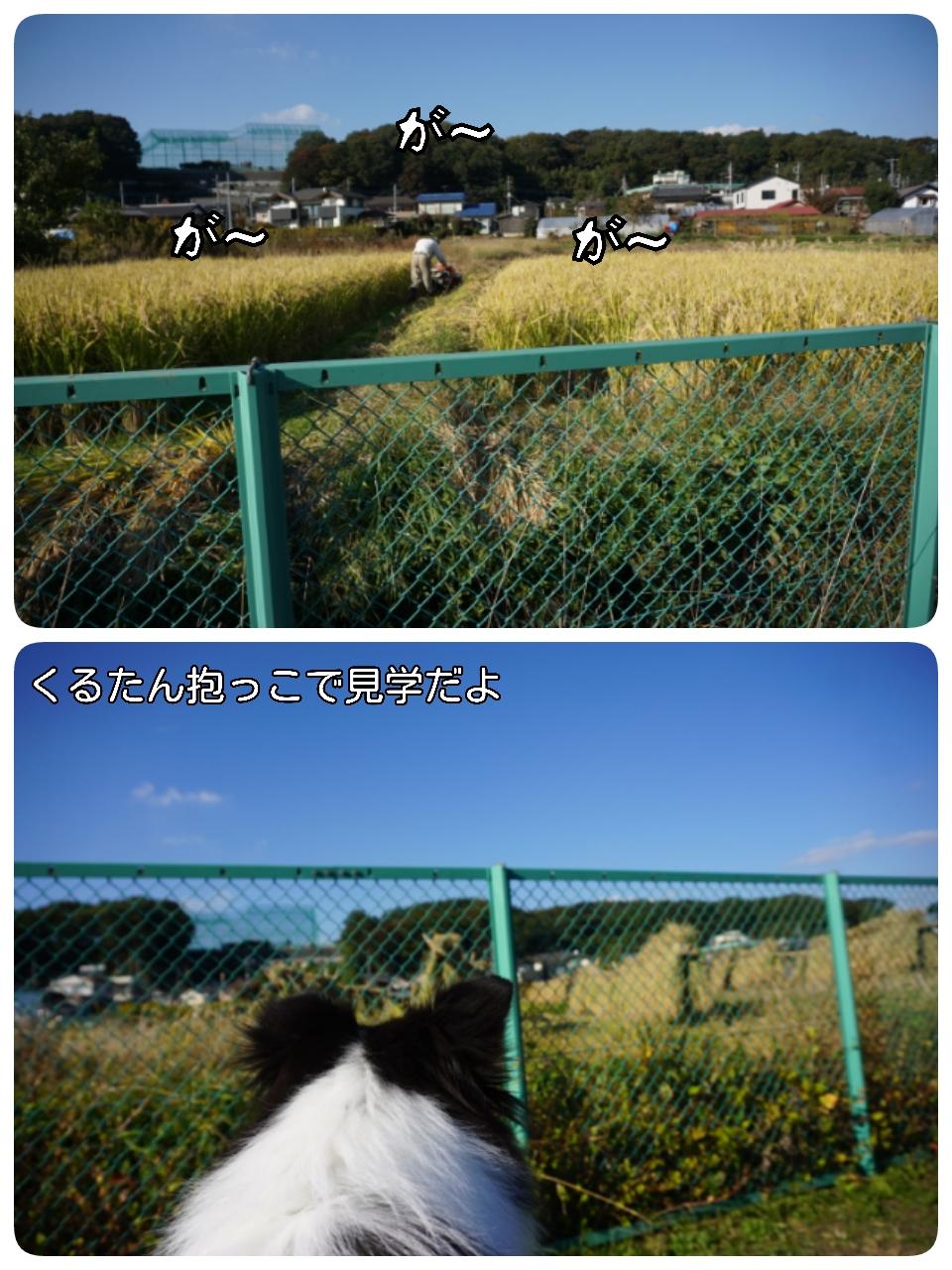 15-11-06-14-17-12-508_deco.jpg
