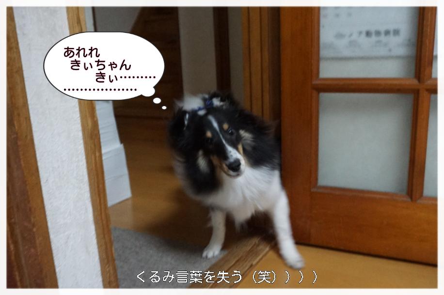 15-11-23-15-37-03-488_deco.jpg