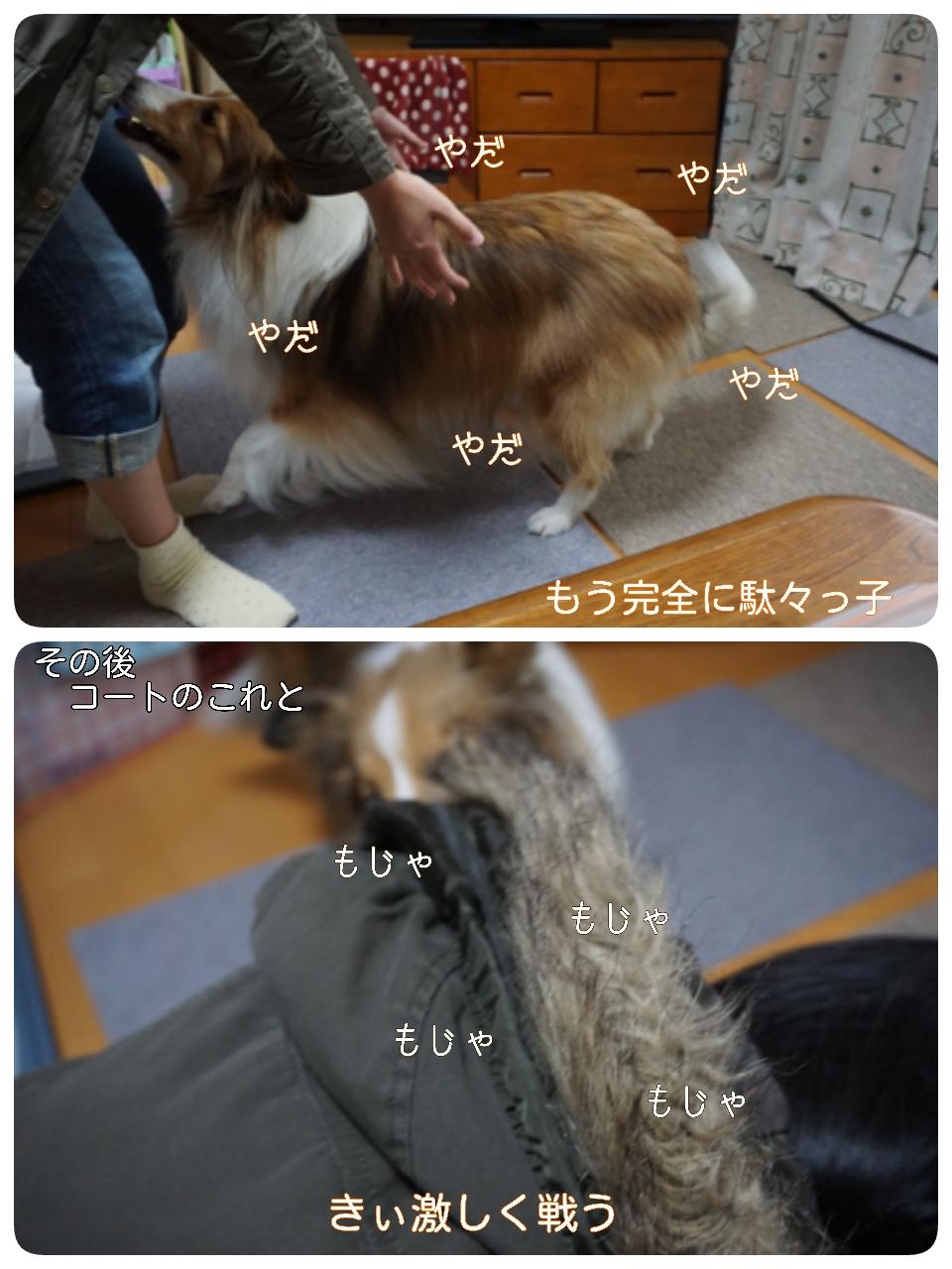 15-11-23-16-01-46-432_deco.jpg