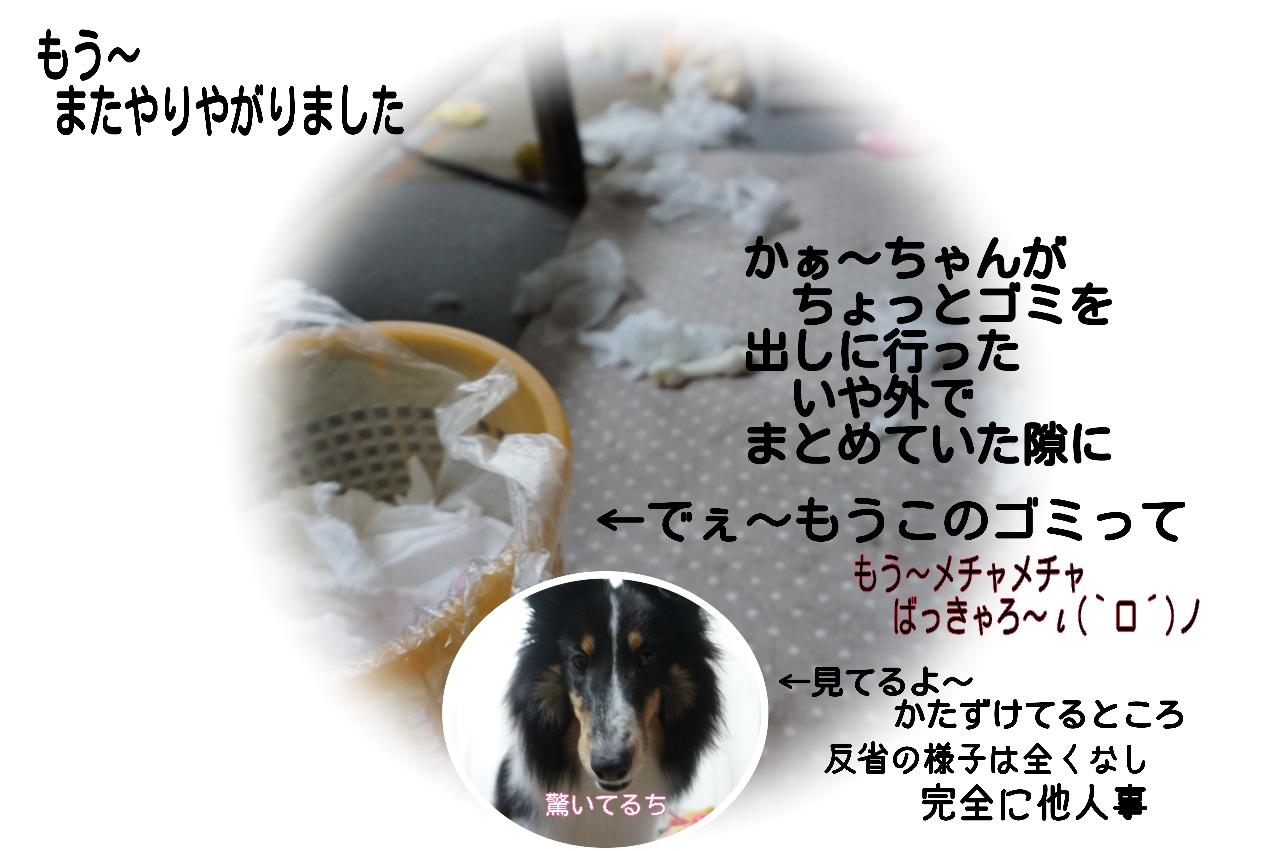 15-12-09-15-33-49-014_deco.jpg