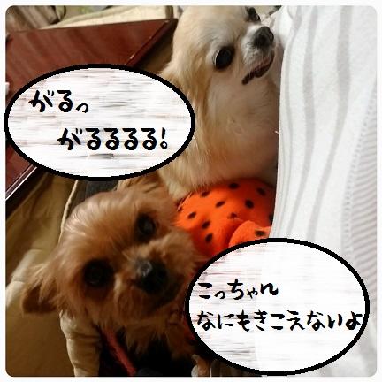 20151121_071319.jpg
