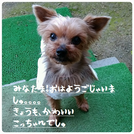 20151201_073408.jpg