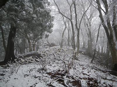 三椏も雪を被って