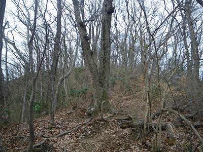 ブナ林も冬枯れ