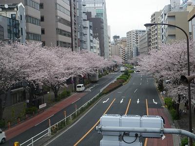 恵比寿の桜