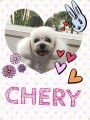 160306cherry.png