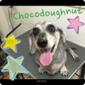 160306chocodoughnut.png