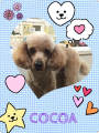 160306cocoa.png