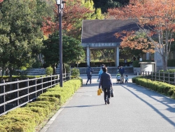 鏡山公園でアコーディオン20151025-1