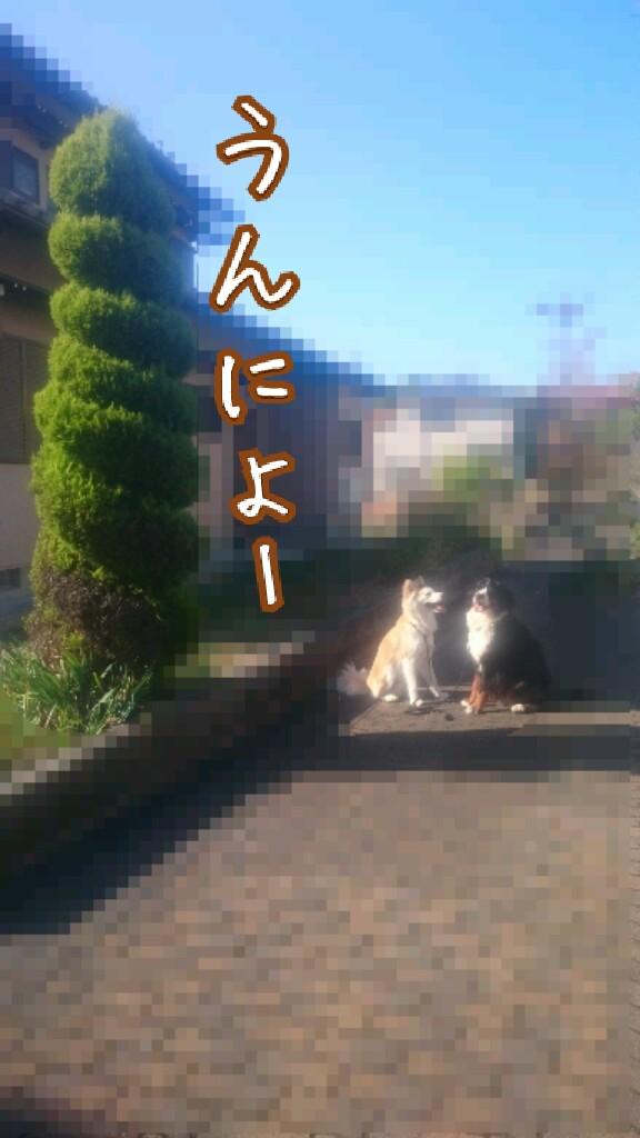20151130120759496.jpg