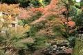⑤箕面川と紅葉