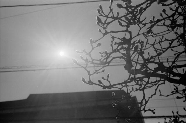 春の予感2016-01a
