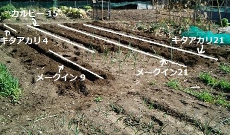 ジャガイモ 栽培場所