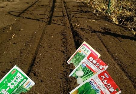 葉物野菜の3月播種