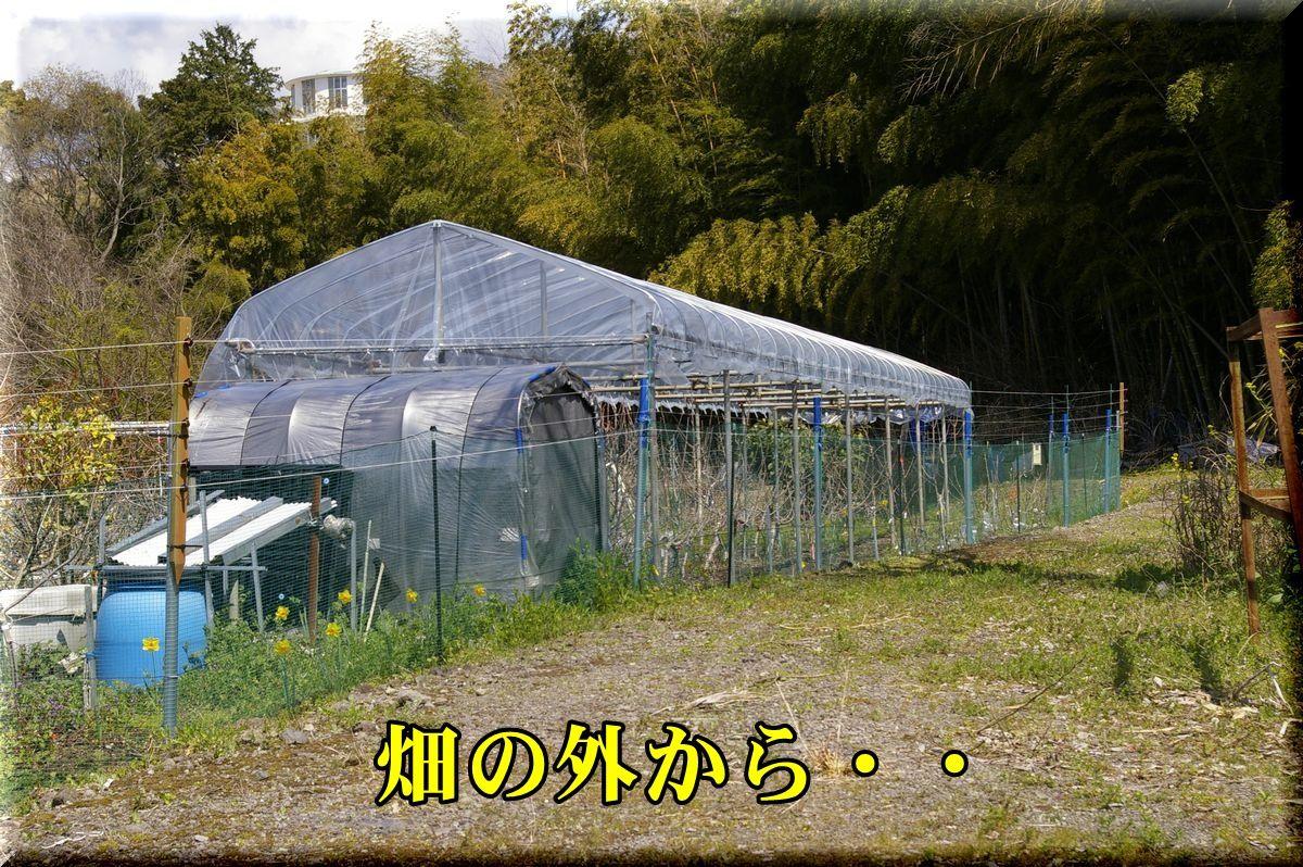 1BH160326_006.jpg