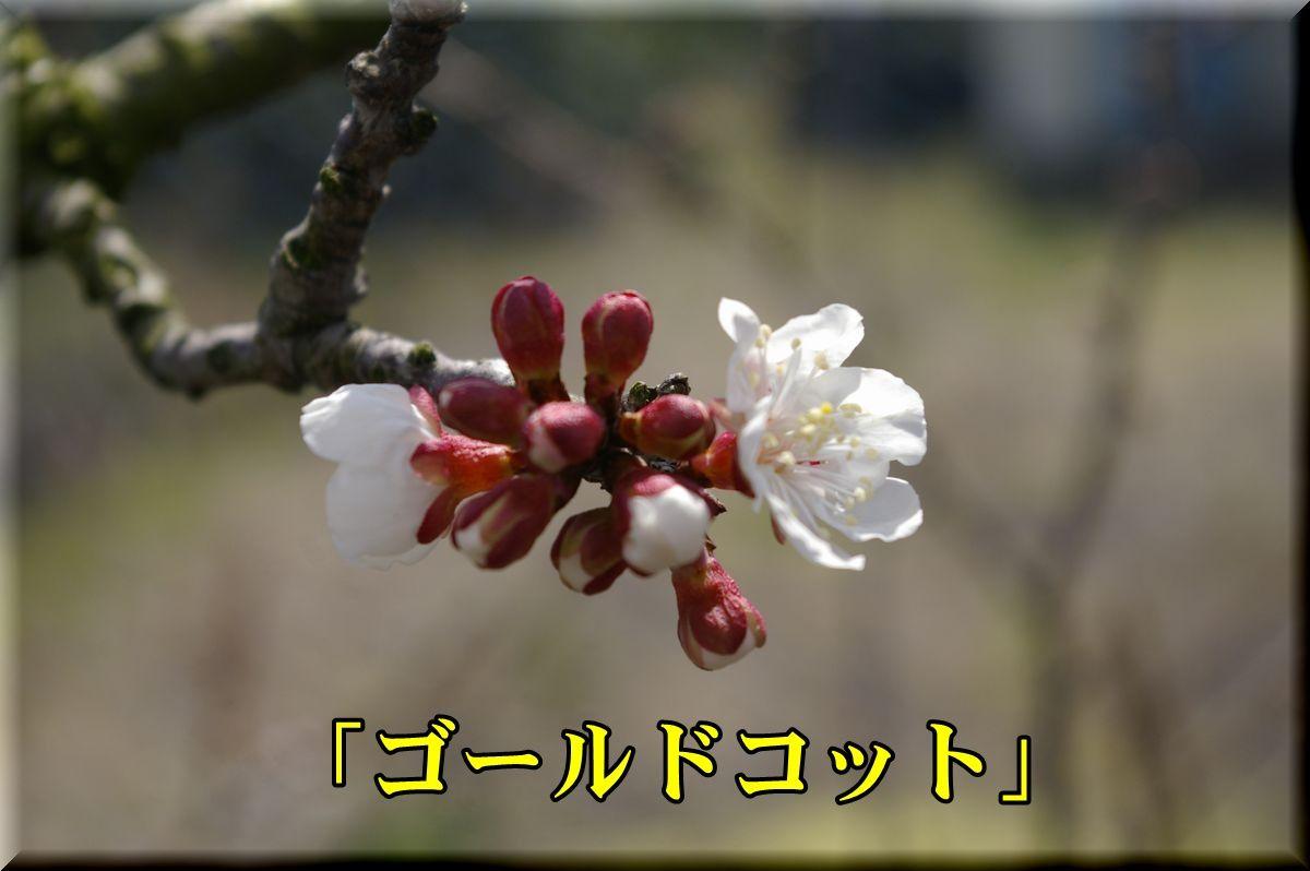 1Gcot160315_005.jpg