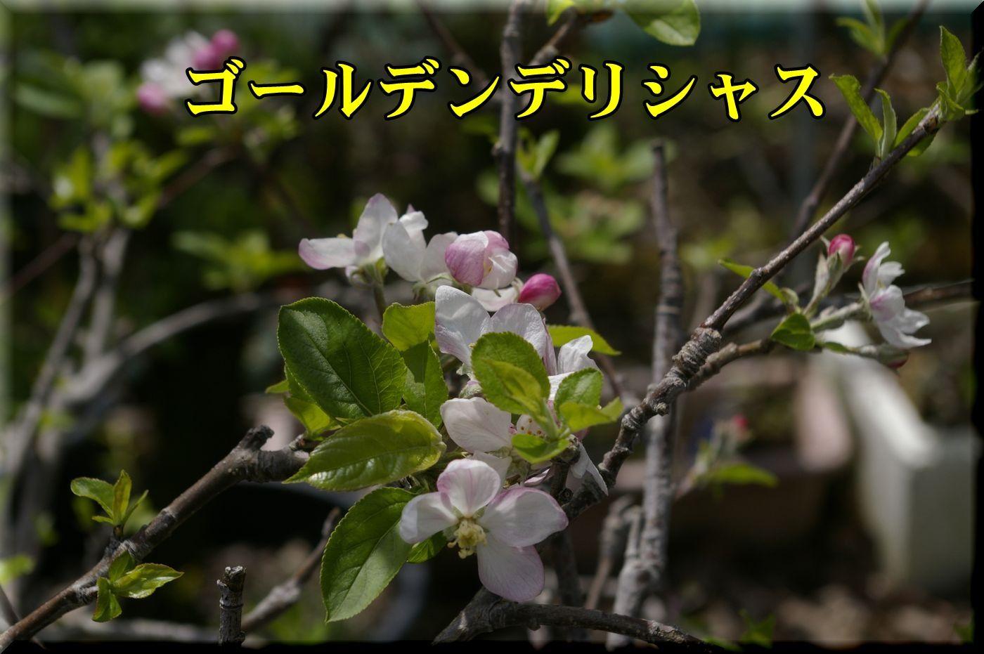 1Gdeli160409_013.jpg