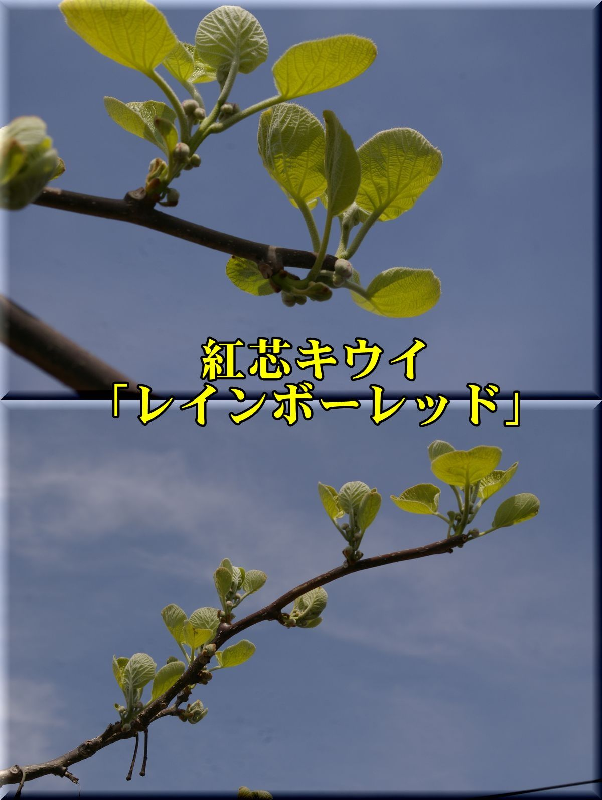 1Rred160331.jpg