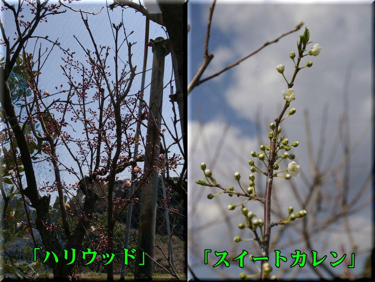 1hariwood160315_011.jpg