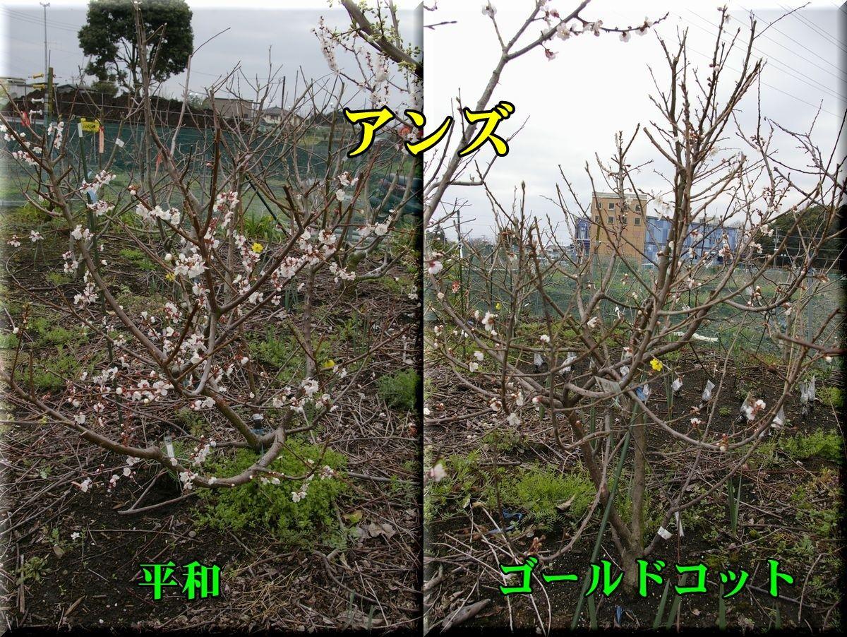 1heiwa160320_002.jpg