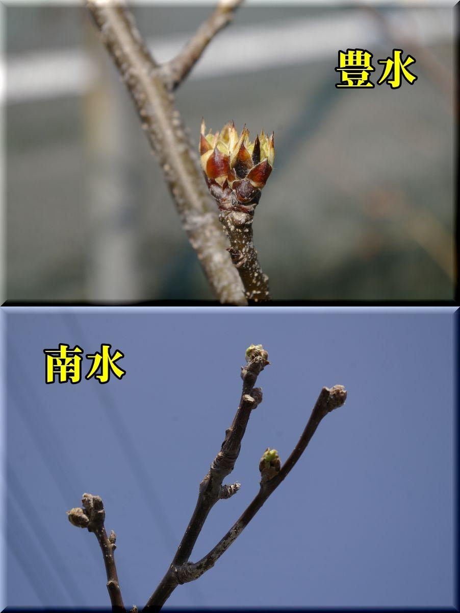 1hou_nan160325_011.jpg