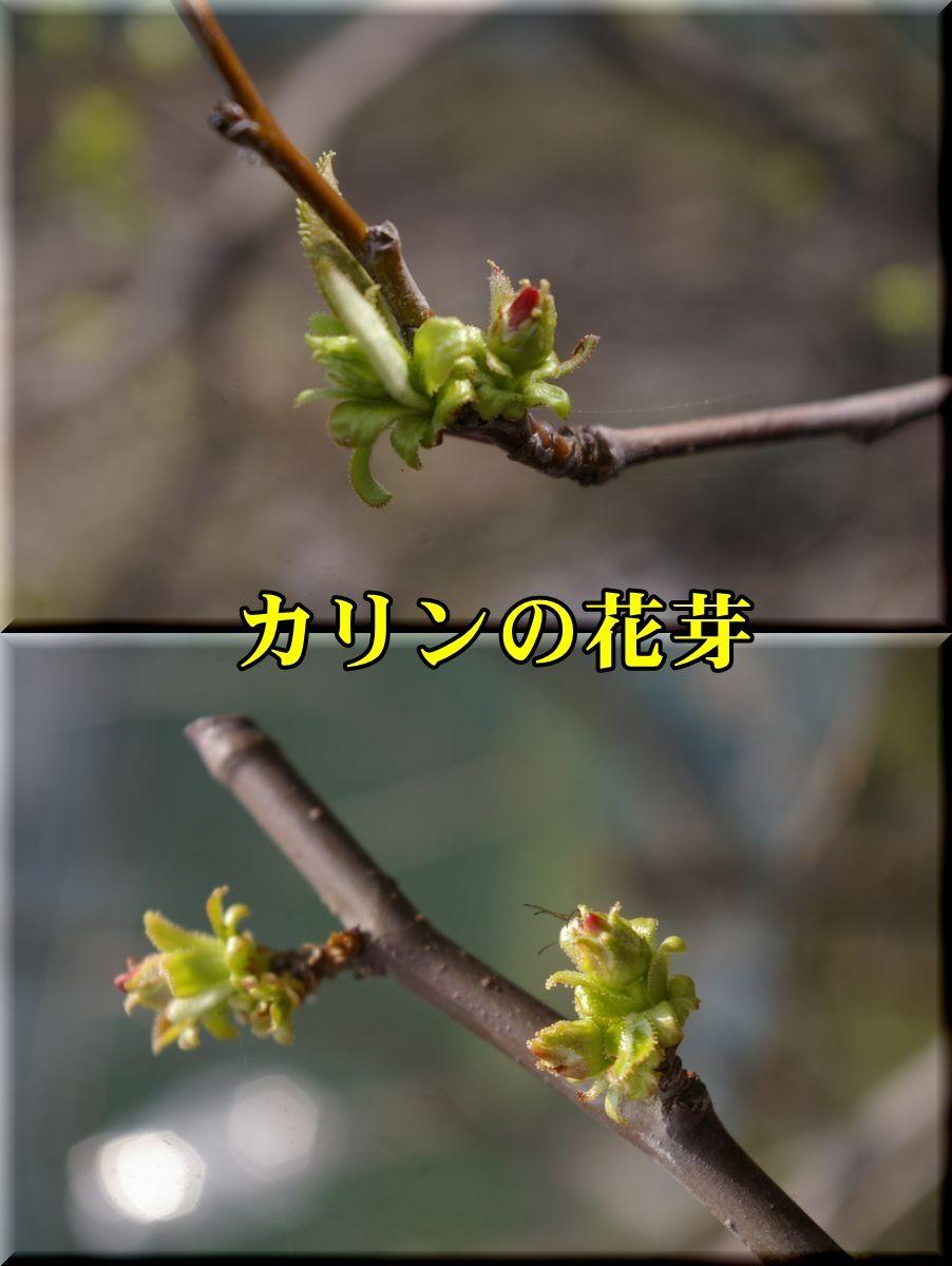 1karin160320_017.jpg