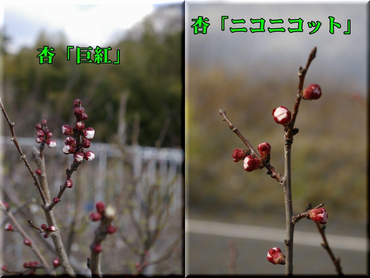 1kyo_nic160312_006.jpg
