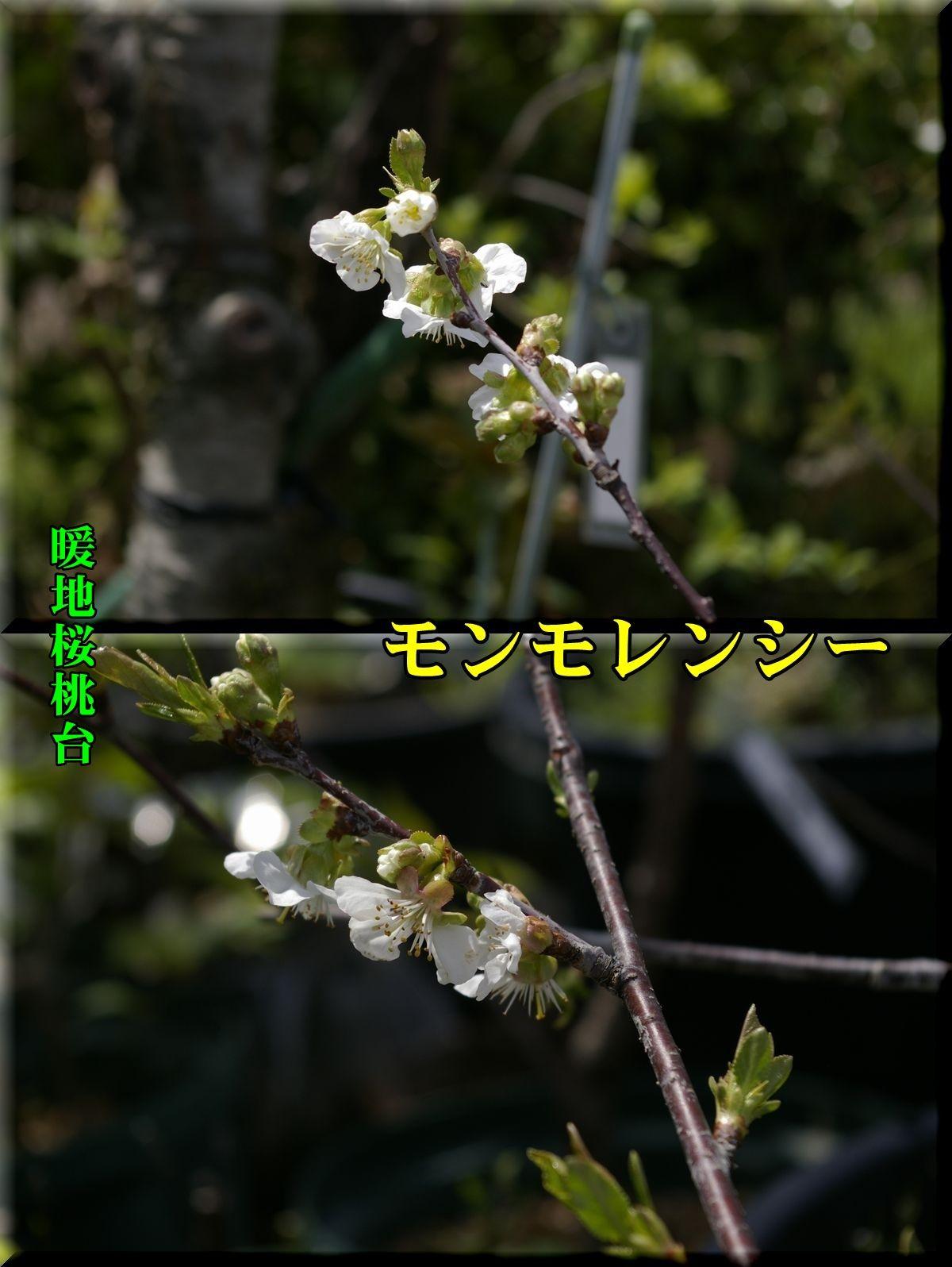 1monmo160409_001.jpg