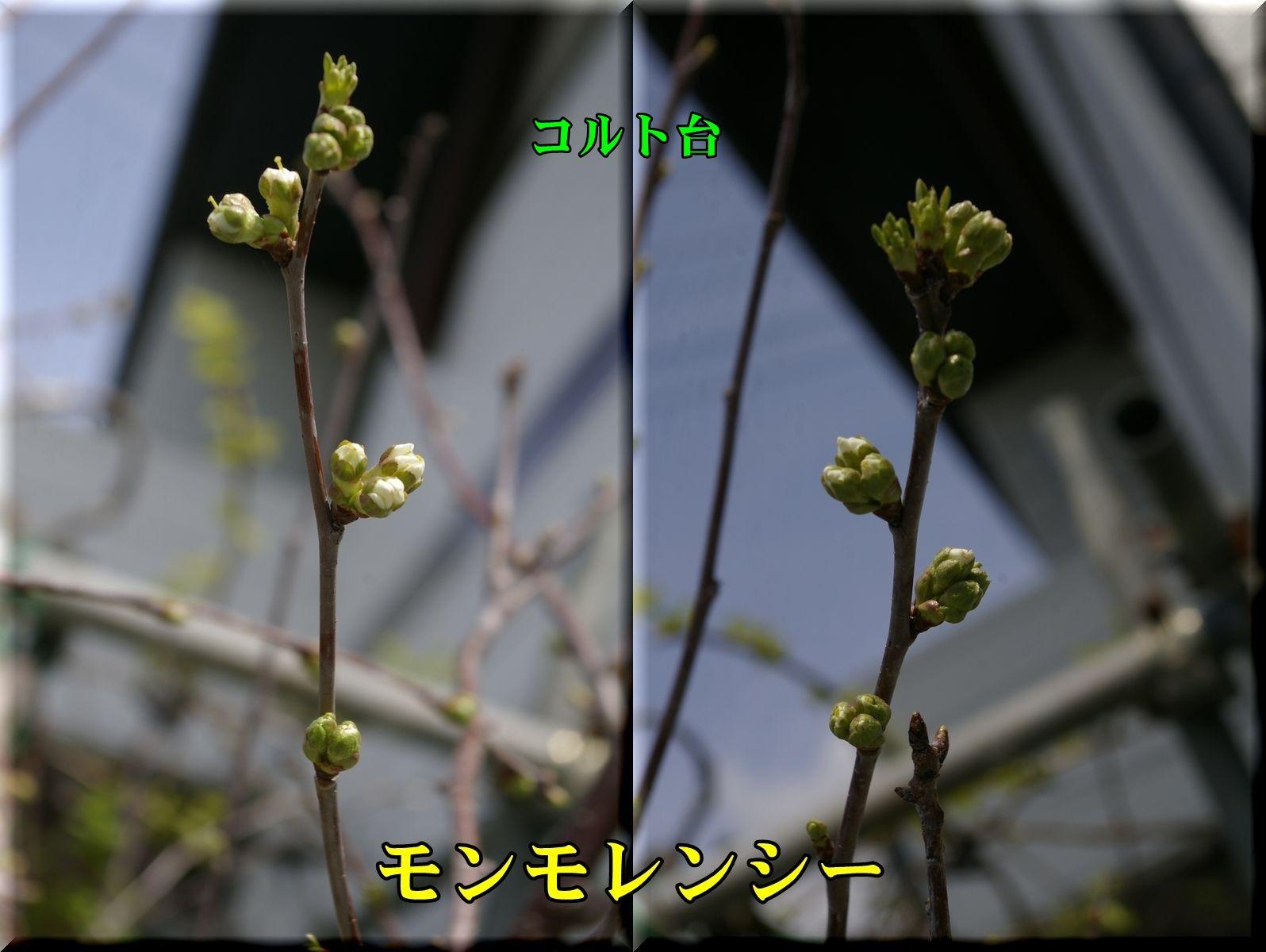 1monmo160409_006.jpg