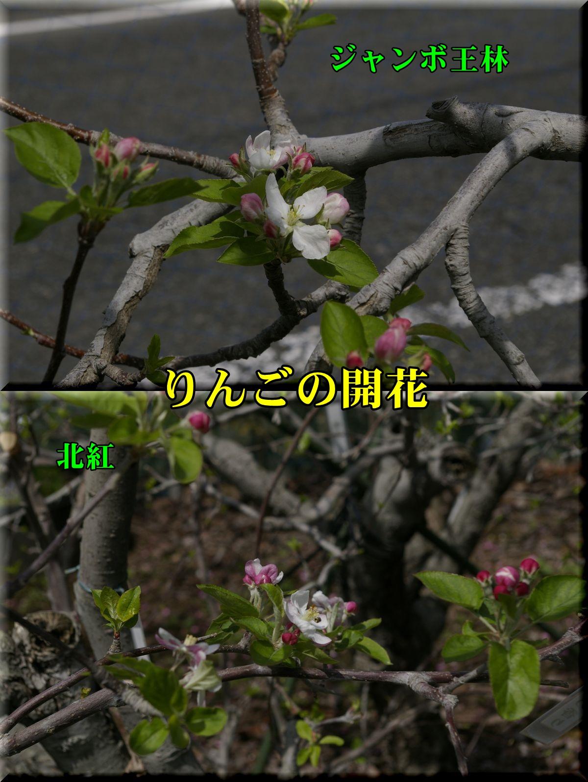 1orin160409_012.jpg