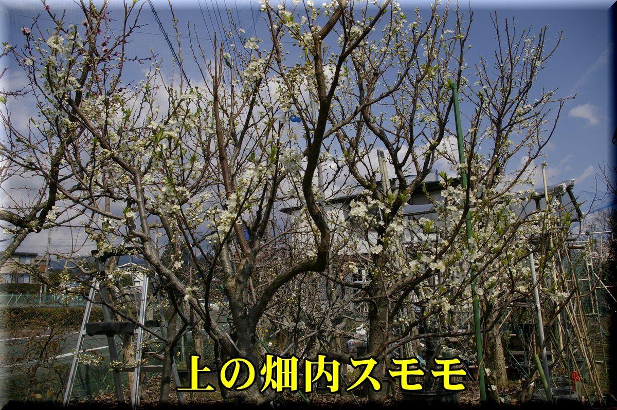 1su160325_028.jpg
