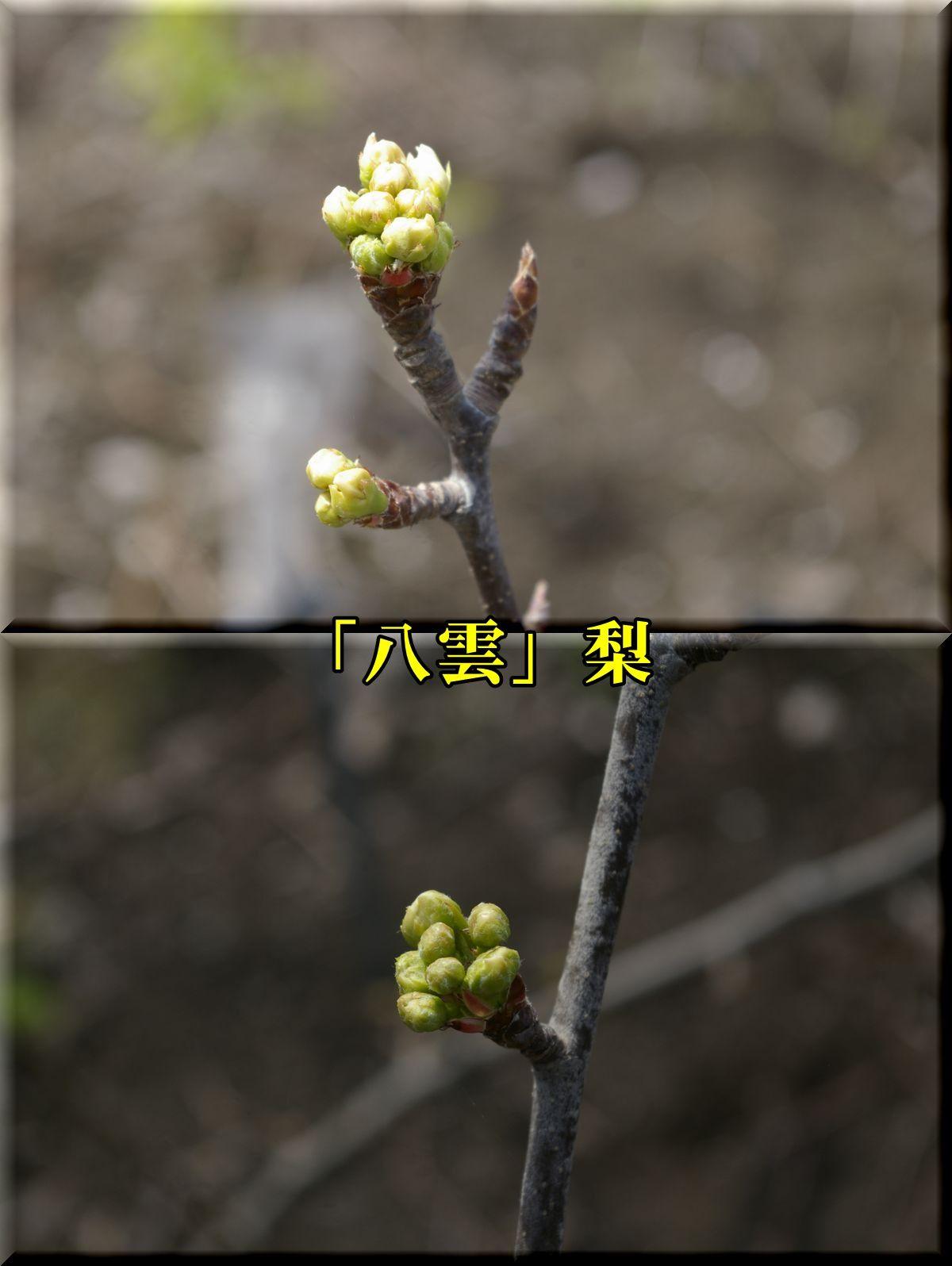 1yakumo160331_024.jpg