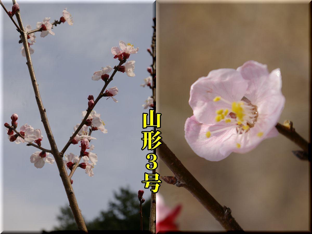 1yamagata160320_019.jpg