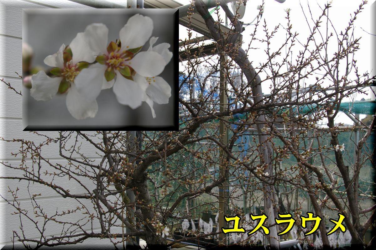 1yusura160318_009.jpg