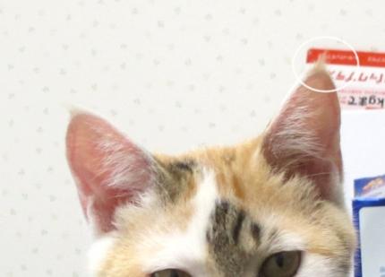 1501012_cat003.jpg