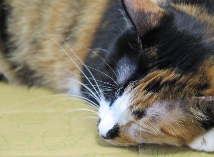 151021_cat3.jpg