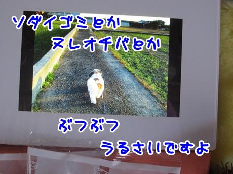 0317-10.jpg