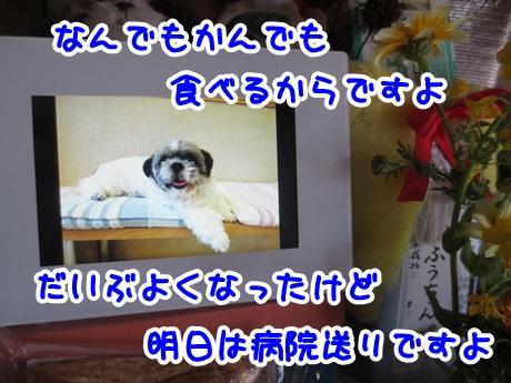 0328-01_20160328170052fda.jpg