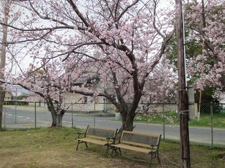 0403-桜