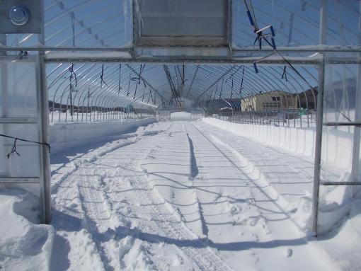 20160313_9番ハウス除雪後