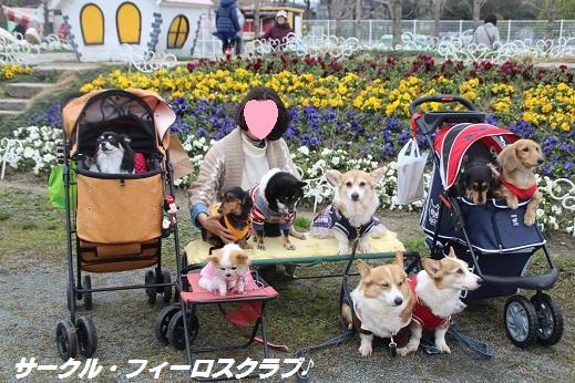 香椎花園1 2016-3-13-4